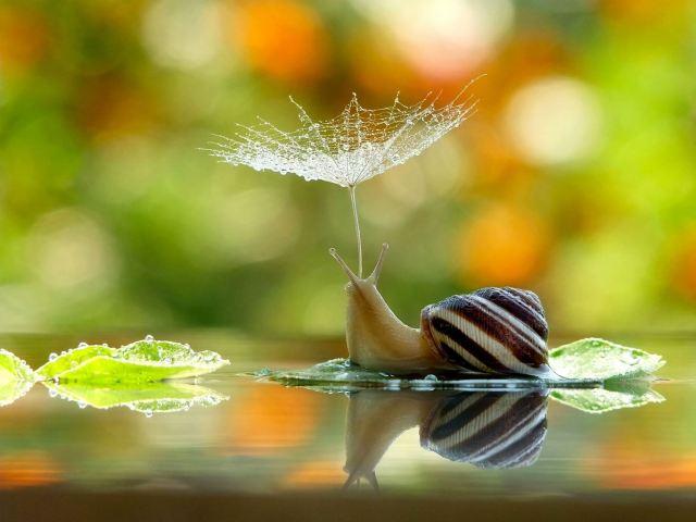 fe9b65de-db24-488c-bb63-f05343277d98_snail-with-umbrella18022013