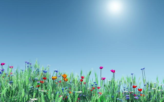 spring-flowers-high-quality-wallpaper